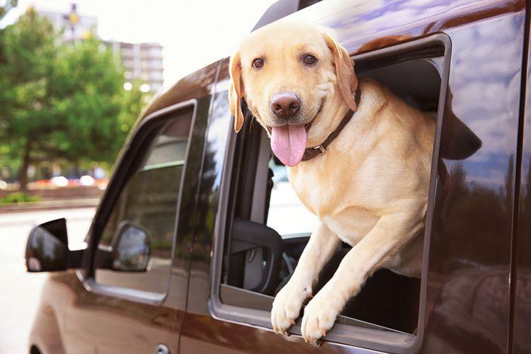aa40c7caf1c93 Preprava psa v aute. Treba pásy alebo kvalitnú prepravku | TopByvanie.sk