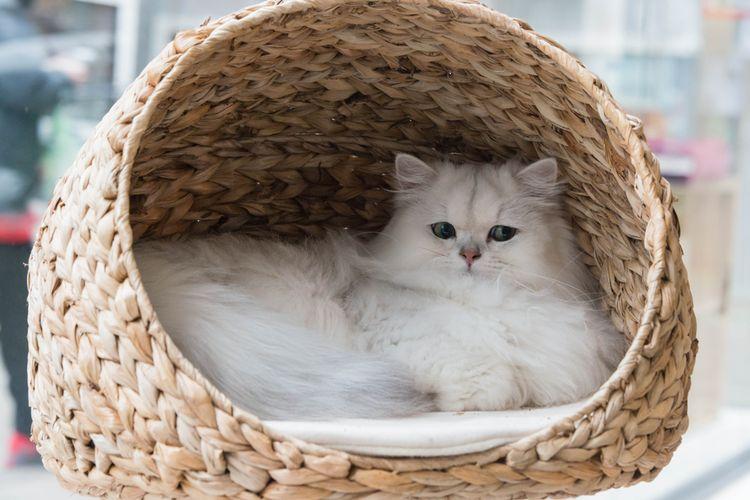 Odpočívadlo pre mačky z ratanu fe43992b127