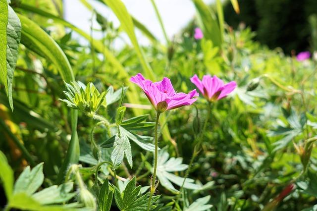 Ako sa zbaviť buriny v záhrade