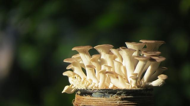 6536451f7 Hliva ustricová - pestovanie na dreve a slame | TopByvanie.sk