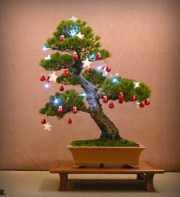 Vánoční stromek - bonsai