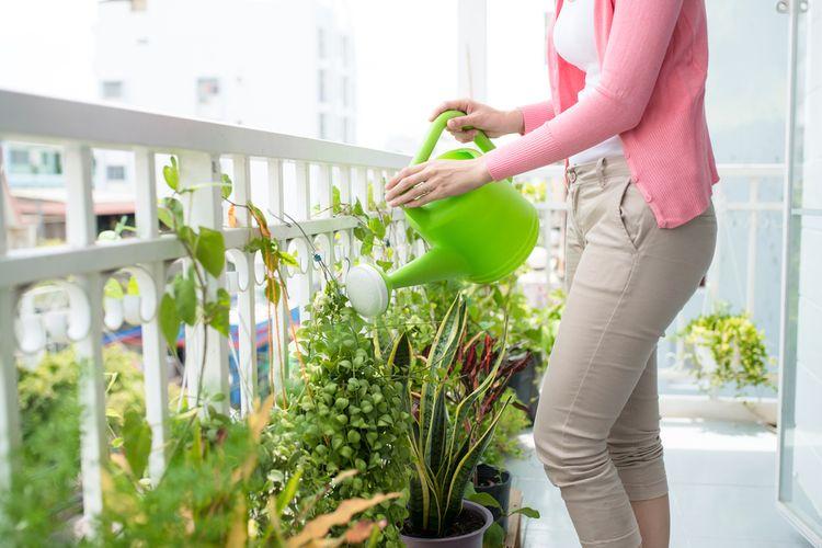 Polievanie kvetov na balkóne
