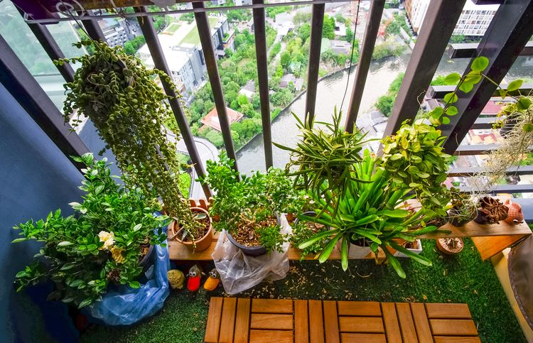 Zelené rastliny ba balkóne