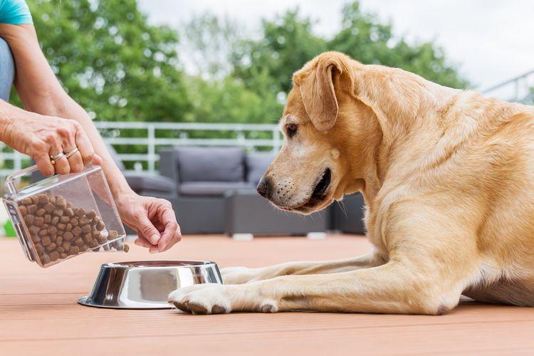 13d44f728a Najlepšie krmivo pre psa  Recenzie a test chvália Hypoalergénne ...