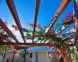 Vhodné rýchlorastúce popínavé/ťahavé rastliny na pergolu – ruže, vinič, plamienok, hortenzia
