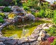 Odstránenie rias v jazierku: vhodné rastliny, ryby, jačmenná slama, prípravky proti riasám