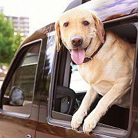 Bezpečné cestovanie so psom v aute: Aké pomôcky prídu vhod?