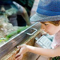 Zariadenie terária pre hada je lacné - chov hada pre začiatočníkov