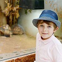 Ako zariadiť terárium pre suchozemskú korytnačku?