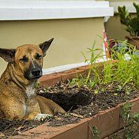 Ako odnaučiť hrabať psa a značkovať v záhrade