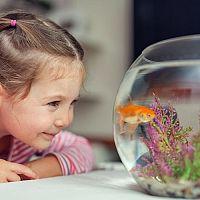 Prvé vlastné akvárium - ako vybrať? Aké doplnky a čo kúpiť