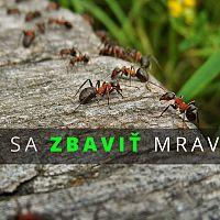 Ako sa zbaviť mravcov v byte, dome, na záhrade aj v pieskovisku