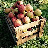 Ako uskladniť ovocie a zeleninu