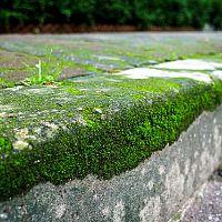 Ako odstrániť mach z dlažby?