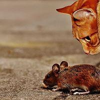 Plašiče myší a odpudzovače hlodavcov – fungujú?