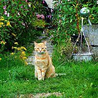 Ako vyhnať mačku zo záhrady