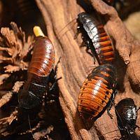 Ako sa zbaviť švábov či ploštíc v byte?