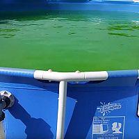 Ako sa zbaviť zelenej vody a rias v bazéne?