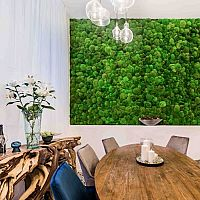 Machové steny sú in! Poznáte najväčšie výhody stabilizovaného machu v interiéri?