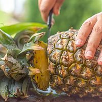 Ako vypestovat ananás z odrezku