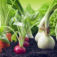 Čo s čím sadiť a pestovať v záhrade? Čo po zemiakoch, cesnaku, cibuli
