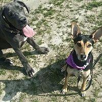 Juraj Ferko z výcvikovej školy Doggie: Vychovať aj vycvičiť sa dá každý pes