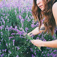 Levanduľa – pestovanie, rozmnožovanie, presádzanie, zazimovanie