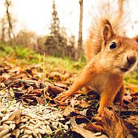 Ako sa zbaviť veveričky v záhrade či na povale?