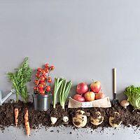 Ako využiť domáci kompost?
