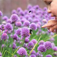 Ako vytvoriť záhradu, ktorá bude priateľská aj pre včely?