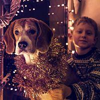 Domáce zvieratká a Silvester – ako ich chrániť a upokojiť pri hluku?