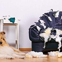 Odnaučiť psa hrýzť nábytok a mačku škriabať sedačku je ťažké