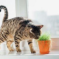 Jedovaté rastliny pre mačky. Je Aloe Vera nevhodná?