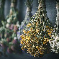 Zber a sušenie liečivých rastlín v sušičke, rúre, na slnku. Ako skladovať sušené bylinky?
