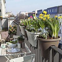 Ako sa zbaviť hmyzu na balkóne? Sviečka proti hmyzu aj kvety proti komárom a muchám pomôžu