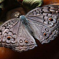 Ako sa zbaviť nočných motýľov v byte a v záhrade? Pomôže chémia i babské rady