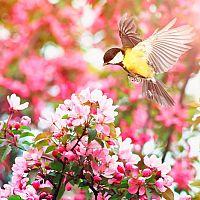 Prínosné vtáky v záhrade: sýkorky, vrabce, drozdy, škorce, žlny, vrany, sojky. Ako ich prilákať?