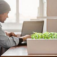 Inteligentné kvetináče na bylinky: Smart Garden, Lua, Click and Grow