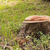 Ako odstrániť peň zo záhrady? Pomôže likvidátor pňov i prípravok na ničenie koreňov stromov