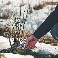 Pripravte svoju záhradu na jar ešte v zime. Ako postupovať?