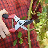 Ako vybrať najlepšie záhradné nožnice na konáre, trávu, živý plot