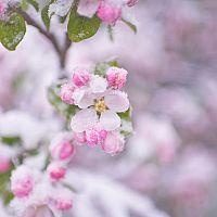 Rady, ako ochrániť stromy pred jarnými mrazmi