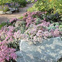 Ako využiť kamene v záhrade? Ozdobné, nášľapné, prírodné či maľované kamene záhradu skrášlia