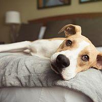 Čo s domácim miláčikom počas dovolenky? Pre psíka hotel, pre mačku opatrovník