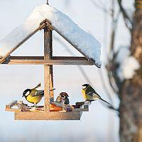 Ako vyrobiť krmivo či krmítko pre vtáky? Poradíme, čo dať jesť vtáčikom v zime!