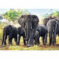 TREFL Puzzle Afričtí sloni 1000 dílků
