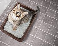Mačacie toalety môžu byť kryté a s filtrom. Najlepšia je silikátová podstielka