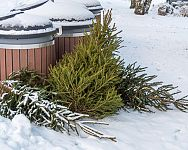 Využitie živého vianočného stromčeka po Vianociach – palivo, mulč či dekorácie