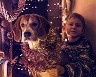 Domáce zvieratká a Silvester - ako ich chrániť a upokojiť pri hluku?
