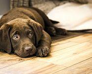 Najlepšia podlaha pre psa – plávajúca, vinylová podlaha, parkety, dlažba alebo korok?